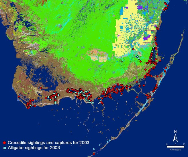 Alligators In Florida Map.Status Of The American Alligator And American Crocodile In Southern