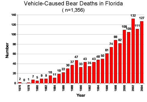 Vehicle Caused Bear Deaths in Florida
