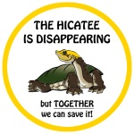 hicatee bumper sticker