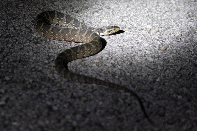 Visual guide to florida snakes:: florida museum of natural history.